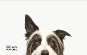 Pet Retailer Still Leaks Credit Card Data of 110K+ Customers